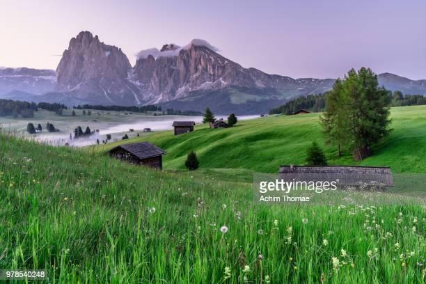 seiser alm, dolomite alps, italy, europe - achim thomae stock-fotos und bilder