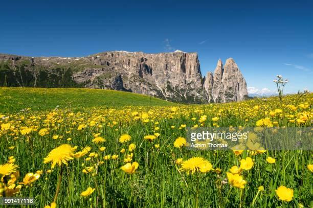 seiser alm, dolomite alps, italy, europe - le quattro stagioni foto e immagini stock
