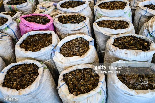 Seized endangered pangolin scales are displayed during a press conference at the Kwai Chung Customhouse Cargo Examination Compound in Hong Kong on...