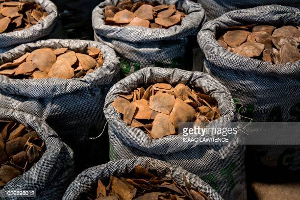 TOPSHOT Seized endangered pangolin scales are seen during a press conference at the Kwai Chung Customhouse Cargo Examination Compound in Hong Kong on...
