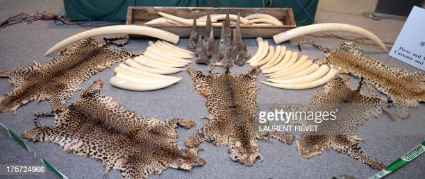 Seized ivory tusks rhino horns and leopard skins are displayed during a press conference in Hong Kong on August 7 2013 Hong Kong customs seized an...
