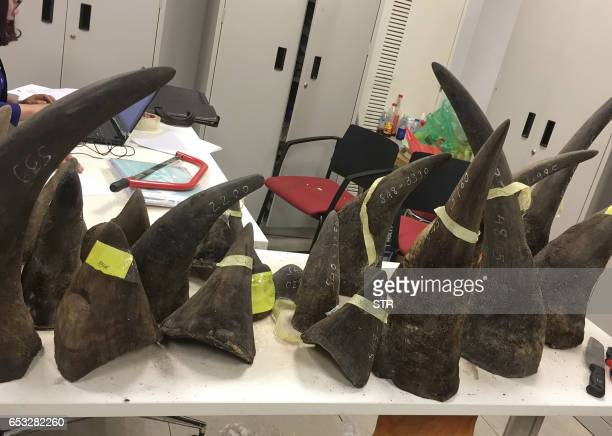 Seized smuggled rhino horn are displayed at a customs office in Hanoi on March 14 2017 Vietnam police seized more than 100 kilograms of rhino horn...