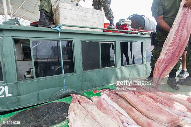 Seizure of illegal fishing by Amazonas State Environmental Police in Manaus city north Brazil pirarucu fish fillet strips the pirarucu also known as...
