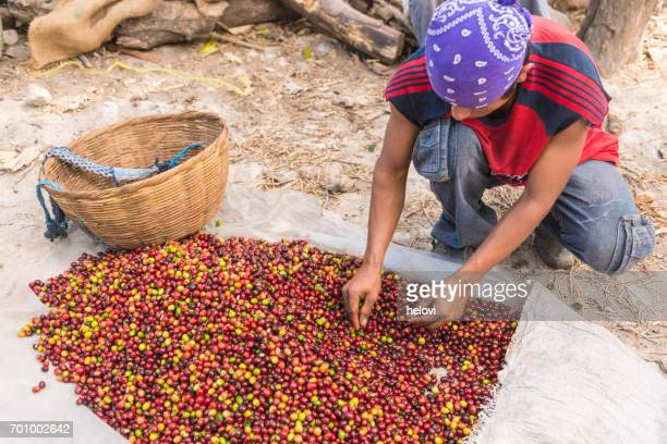 Selecting raw coffee beans