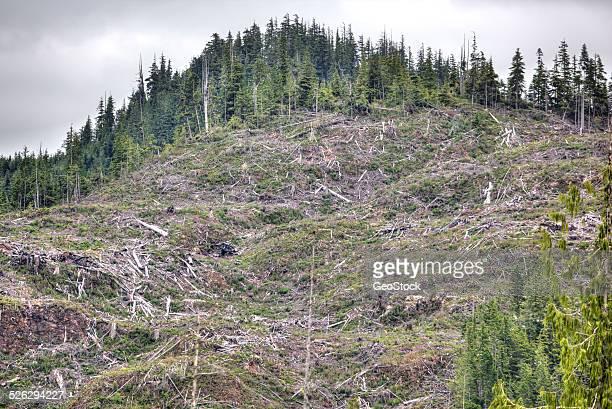 Selection cutting, logging