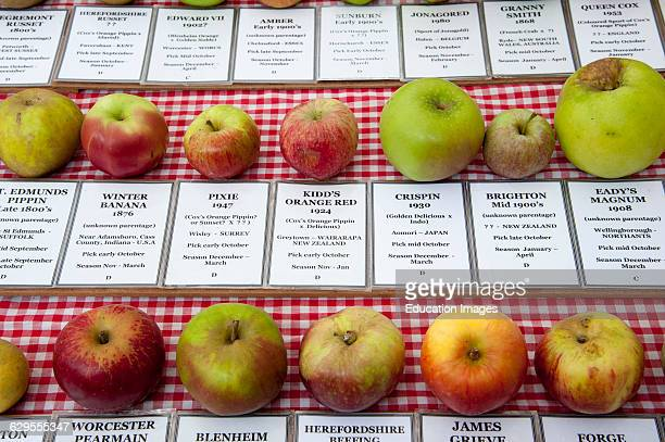 Selection of apples and the details relevant to them mainly grown in the UK