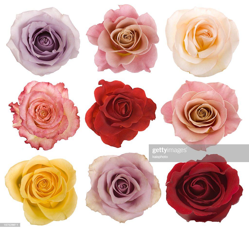 Rose flower stock photos and pictures getty images selection of beautiful roses izmirmasajfo