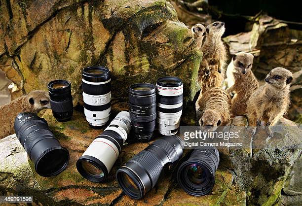 A selection of DSLR lenses in the meerkat enclosure at Exmoor Zoo for a feature on the best kit for photographing wildlife taken on February 21 2014