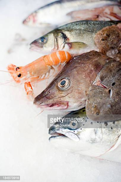 A selection of fish on ice