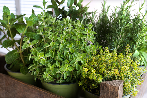 Selection of fresh culinary herbs 1137337969