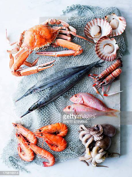 selection of fresh seafood - seafood stock pictures, royalty-free photos & images