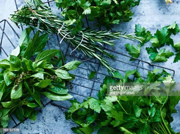 selection of herbs in bunches, overhead view - erbe aromatiche foto e immagini stock