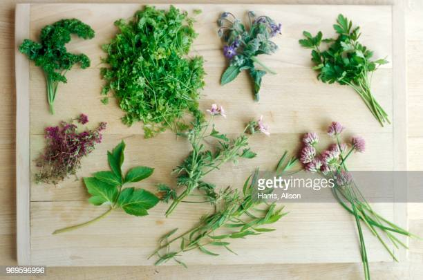 selection of herbs - flat leaf parsley stock pictures, royalty-free photos & images