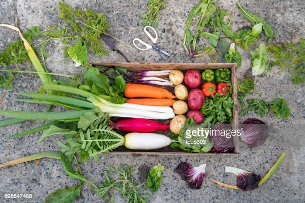 A selection of vegetables ready for shipping at a small business organic farm