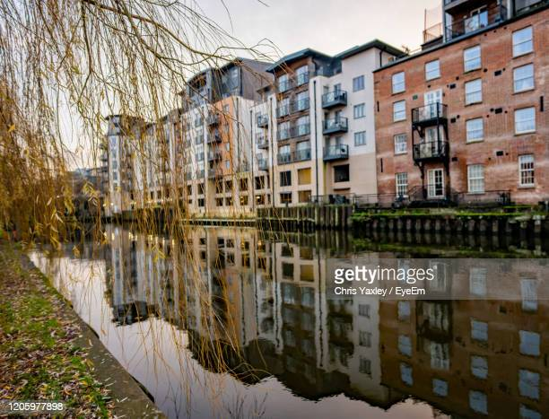 selective focus on overhanging tree branch on the path along the river wensum - differential focus stock pictures, royalty-free photos & images