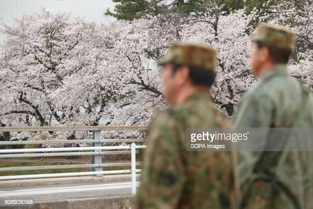 LEVEE TOYOKAWA AICHI JAPAN Self Defense Force staff of the Toyokawa garrison are seen walking in Toyokawa The Cherry blossom also known as Sakura in...