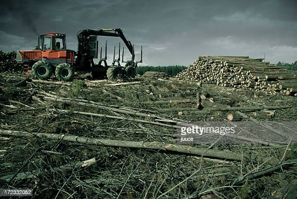 self destruction - deforestation stock pictures, royalty-free photos & images