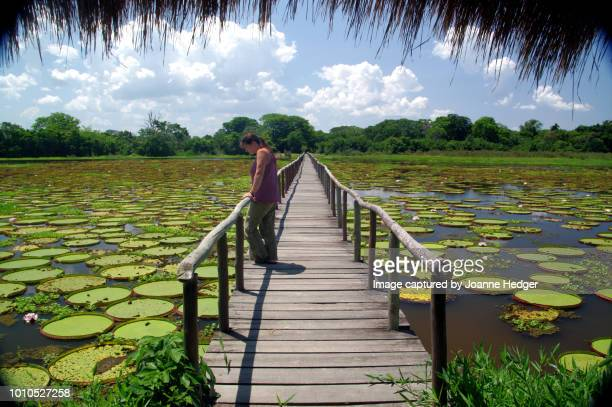 self portrait - joanne hedger - pantanal wetlands stock pictures, royalty-free photos & images