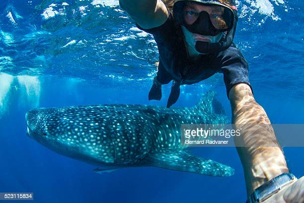 selfie of a snorkeler with a whale shark - isla mujeres stock pictures, royalty-free photos & images