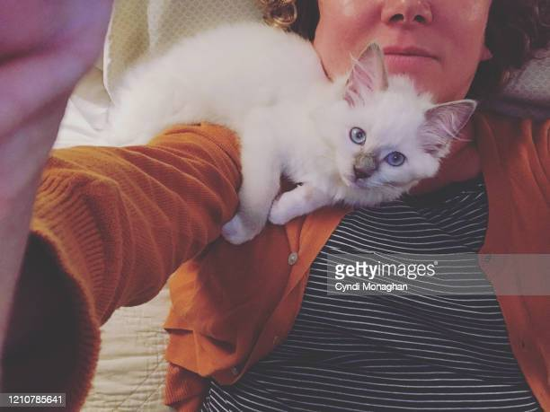 selfie of a woman snuggling a kitten - ragdoll cat stock pictures, royalty-free photos & images