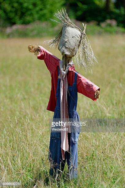 Selfmade scarecrow on a meadow
