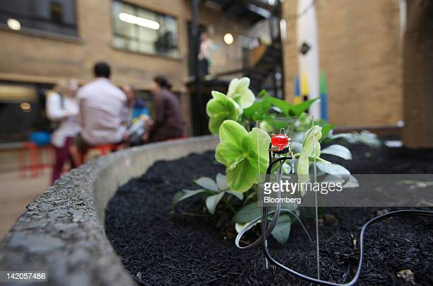A selfwatering sensor sits next to a plant in the courtyard area of Google Inc's tech campus at East London's Tech City during the official opening...