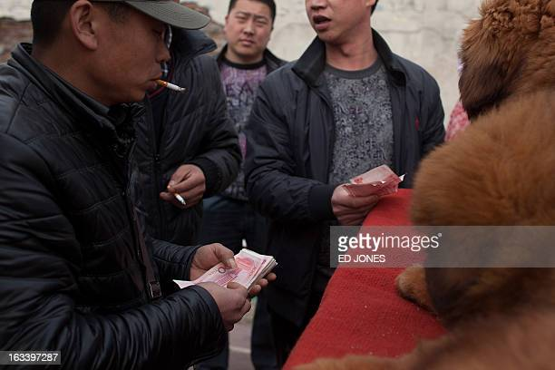 A seller counts money recieved for his Tibetan mastiff dog at a mastiff show in Baoding Hebei province south of Beijing on March 9 2013 Fetching...