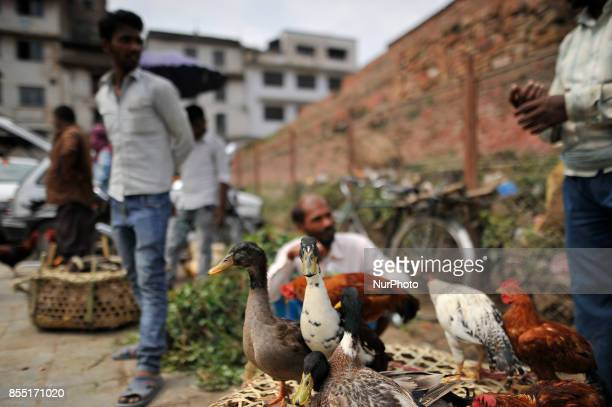A seller migrated from India selling duck at the street of Basantapur Durbar Square Kathmandu Nepal for the Dashain the biggest religious festival of...