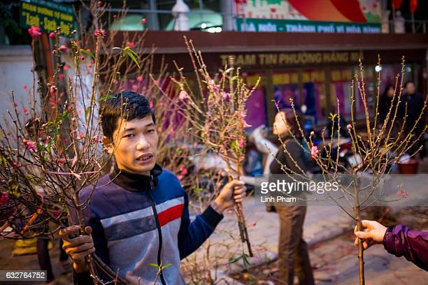 Seller neotiate cherry blossom for sale at Hang Luoc street Lunar New Year fair a favorite shopping place for local people in the Old Quarter on...