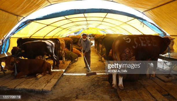 A seller wearing protective face masks as a precaution against coronavirus pandemic cleans cattle for sale under a tent at a livestock market ahead...