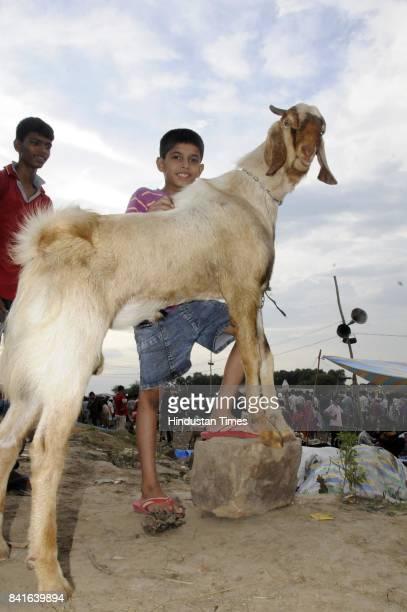 Indian Muslims Celebrate Of Bakri Eid Eid Al Adha Stock