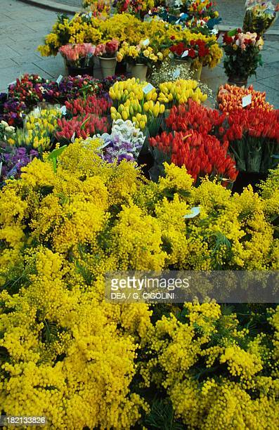 Selling mimosa and tulips Flower Market Aix En Provence France