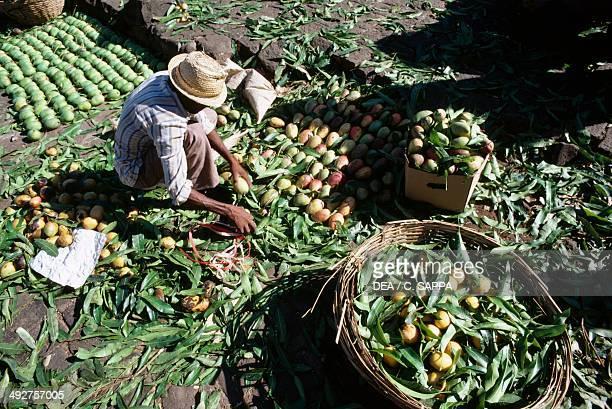 Selling vegetables Port Louis market Mauritius