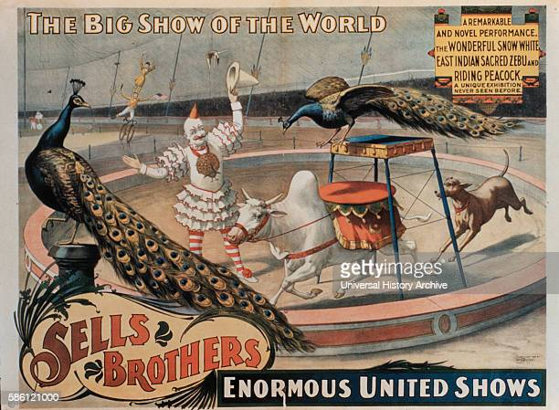 Sells Brothers' Enormous United Shows The Wonderful Snow White East Indian Sacred Zebu and Riding Peacock Circus Poster circa 1880's