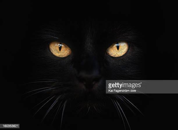 selma - animal eye stock pictures, royalty-free photos & images
