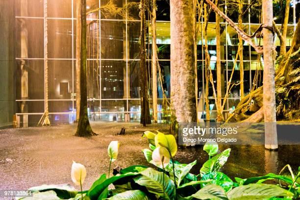 Selva tropical del CosmoCaixa - CosmoCaixa tropial jungle