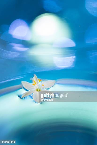 Semi abstract floral fine art photography of a white floating flower.
