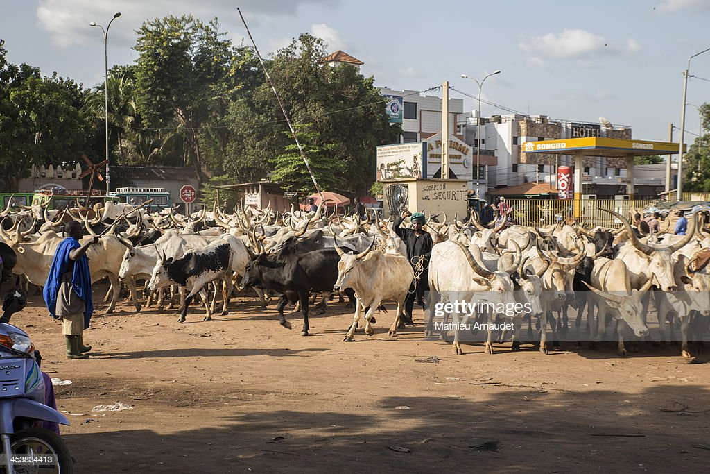Semi nomadic people in city center of Bamako : News Photo