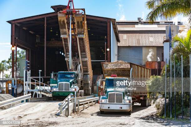 semi trailer truck delivering harvested sugar cane - david freund stock pictures, royalty-free photos & images