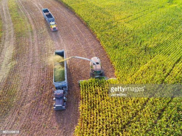 Semi truck and farm machine harvesting corn in Autumn