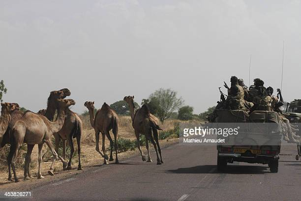 CONTENT] Seminomadic army and camels on the same road to Moundou