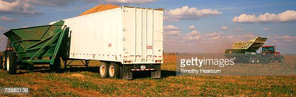 Semi-trailer loaded in Peanut field  with peanut harvester continuing to work field in background