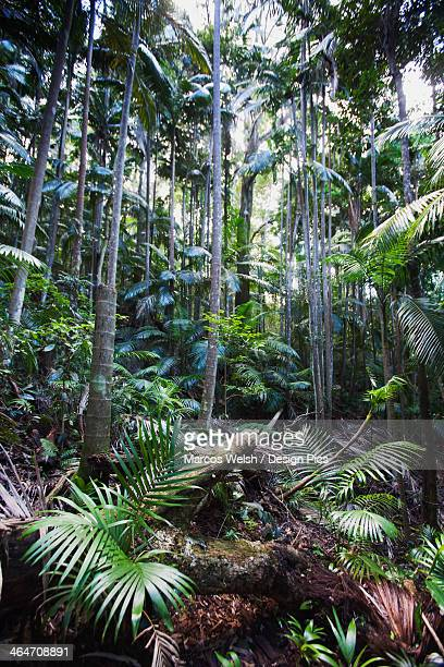 Semi-Tropical Rainforest In Mount Warning National Park