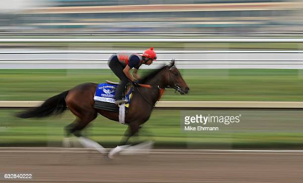 Semper Fortis works out ahead of the $12 Million Pegasus World Cup at Gulfstream Park on January 27 2017 in Hallandale Florida