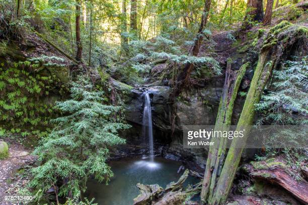 sempervirens falls in big basin redwoods state park, california - big basin redwoods state park stock pictures, royalty-free photos & images