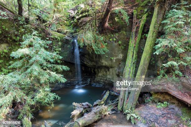 sempervirens waterfall, big basin redwoods state park, california, usa - big basin redwoods state park stock pictures, royalty-free photos & images