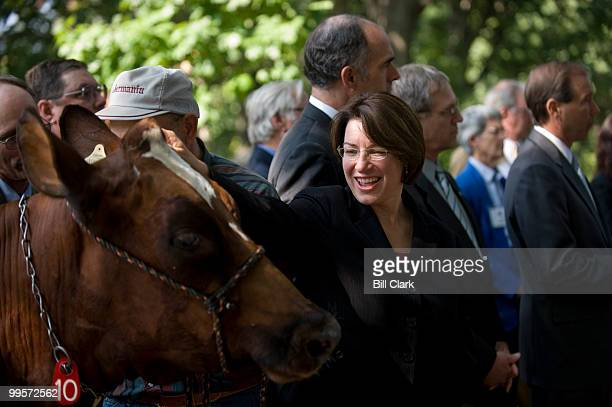 Sen Amy Klobuchar DMinn pets Maple Lawn Maggie during the news conference in Upper Senate Park on legislation to help dairy farmers on Tuesday Sept...