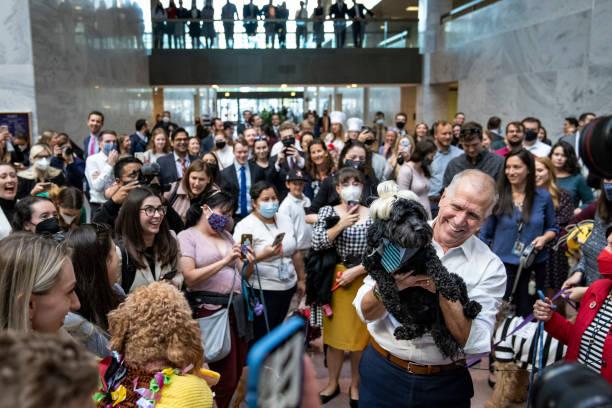 DC: Sen. Tillis Hosts Halloween Dog Parade On Capitol Hill