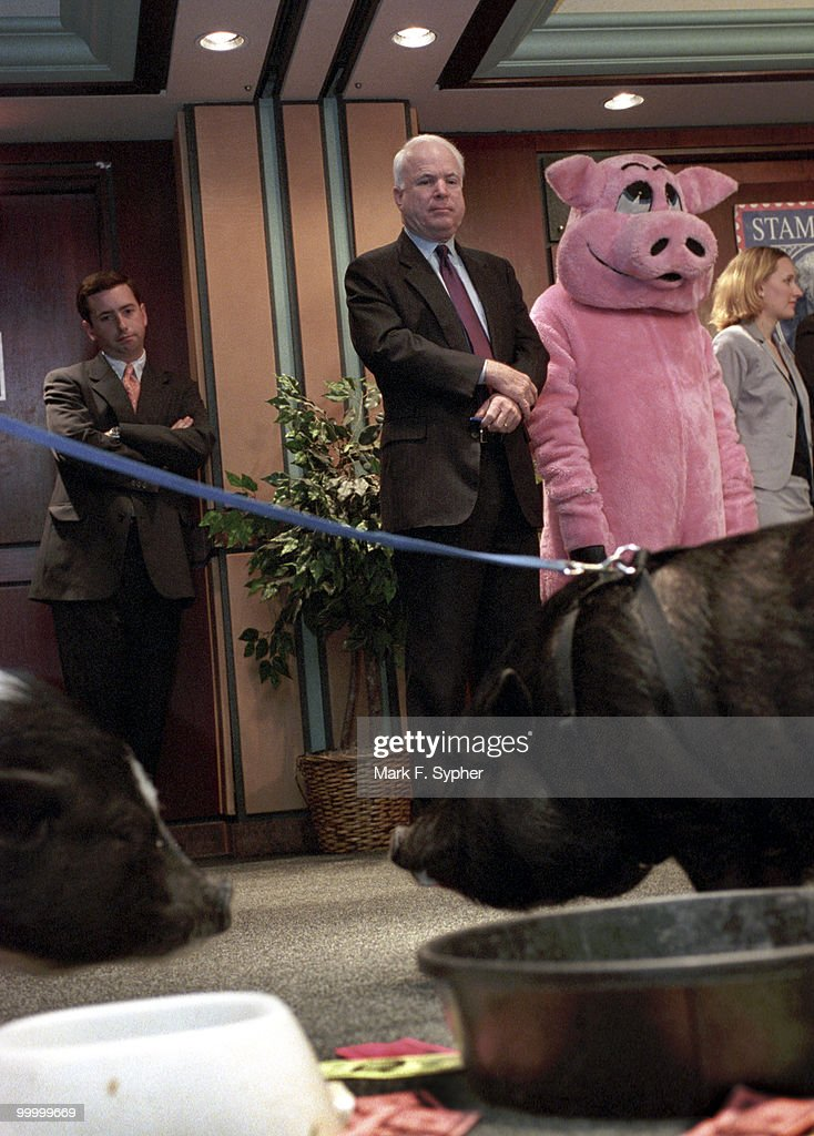 Senator John McCain (R-AZ) awaits his turn at the podium amongst Dudley, left forground, and Winnie, right forground, both Vietnamese Pot Belly pigs, at Citizens Against Government Waste's annual '2002 Congressional Pig' press conference in Washington D.C..