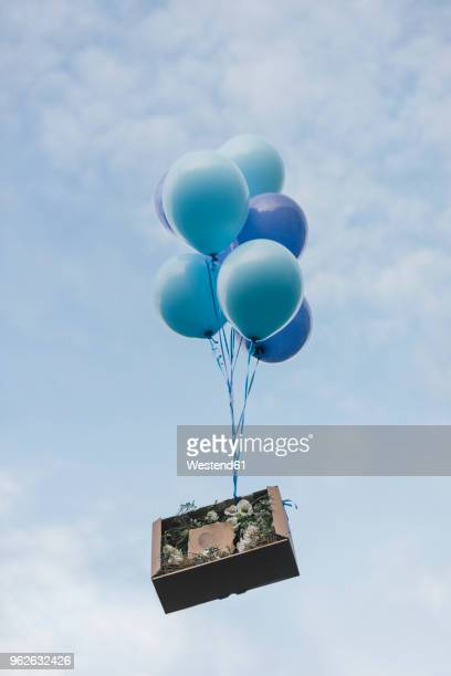 sending floral present in cardboard box with balloons - lightweight stock pictures, royalty-free photos & images